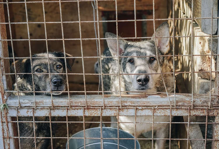 How To Care For Your Dog Cages